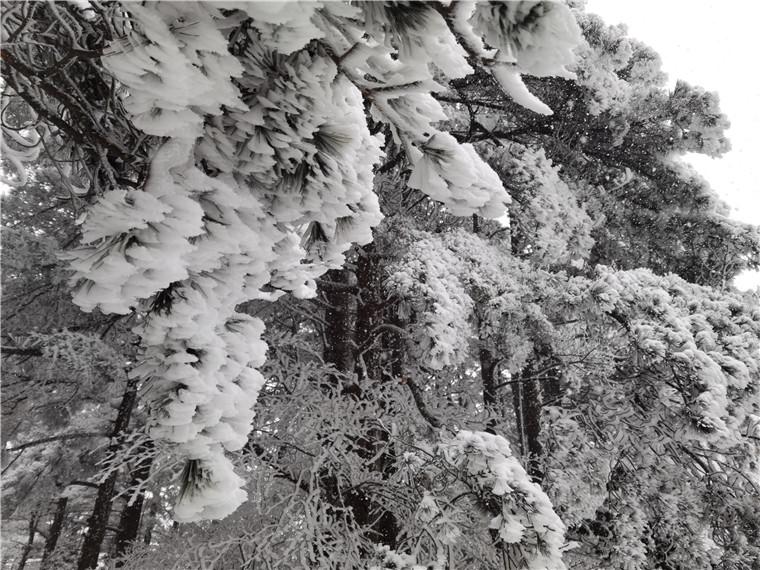 今日黄山,雾凇景观,梅建_副本.jpg