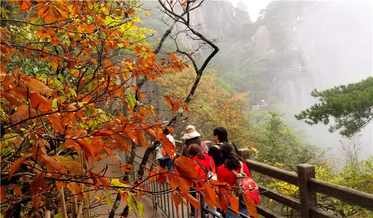 黄山进入秋色最佳观赏期